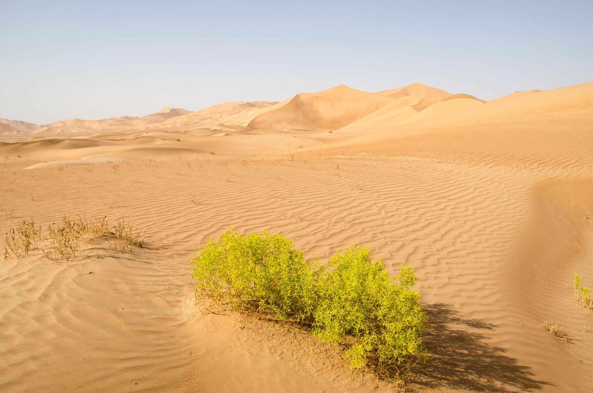 Trotz Sand und Hitze ist die Natur hartnäckig. Foto: Lothar Ruttner