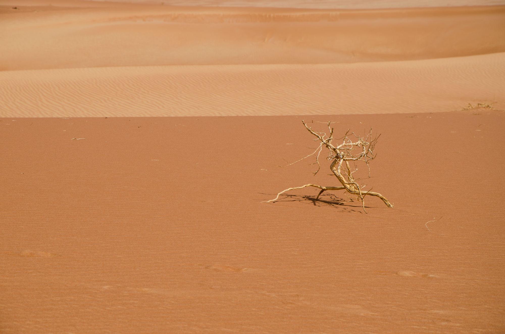 Vertrockneter Ast im Wüstensand. Foto: Lothar Ruttner